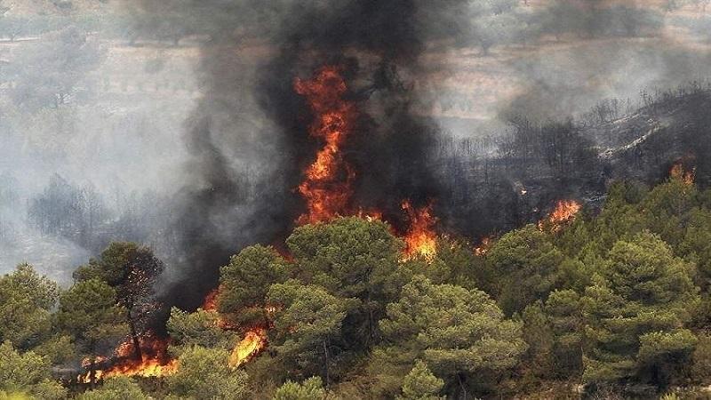 احتمالات و خطرات آتشسوزی جنگلهای کشور | مشاور محیط زیست