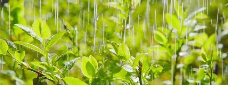 الهام از گیاهان برای استفاده در سیستمهای خنک کننده
