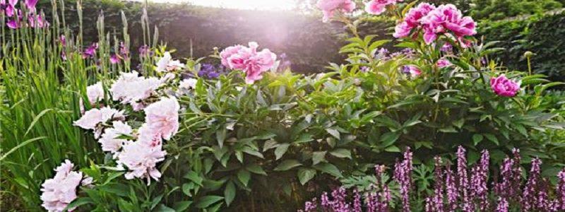 تاثیر عطر گیاهان در مقاومت آنها برابر سرما