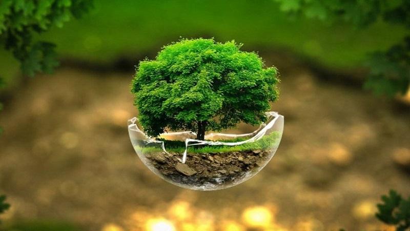 تفاوت محیط زیست و طبیعت