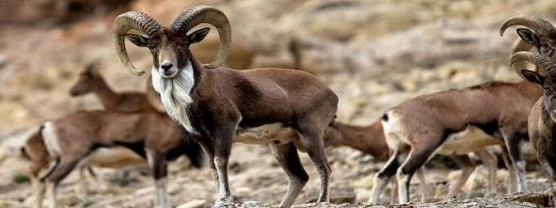 جمعیت حیات وحش طی ۵۰ سال اخیر ۶۰ درصد کاهش یافته