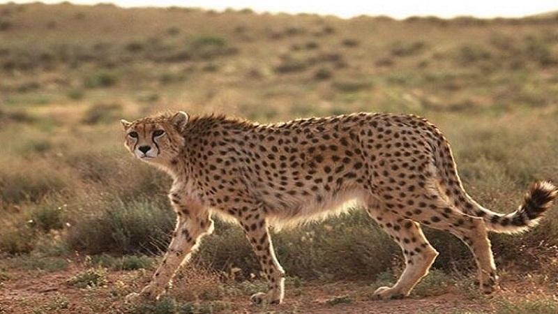 جمعیت حیات وحش طی ۵۰ سال اخیر ۶۰ درصد کاهش یافته است | مشاور محیط زیست