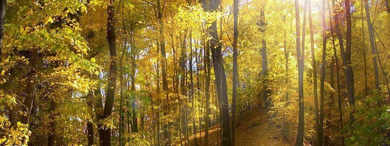 جنگل؛ طلای سبز
