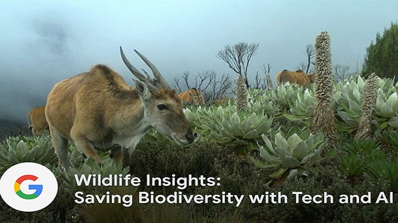 رصد حیات وحش توسط گوگل با استفاده از مدلهای هوشی مصنوعی   مشاور محیط زیست
