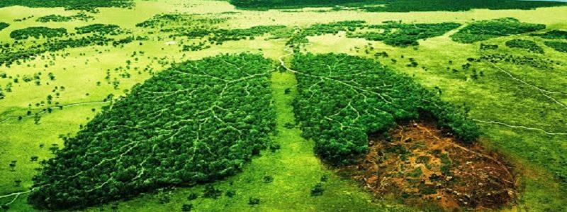 طبیعت، بستر رشد و تعالی انسان