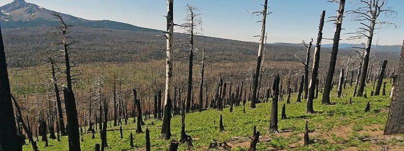 کوچکشدن جنگلها چه تأثیری بر حیات وحش میگذارد؟