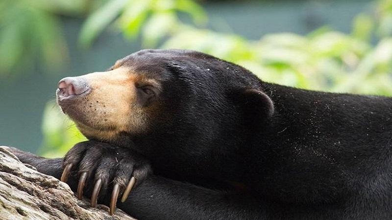 کوچکشدن جنگلها چه تأثیری بر حیات وحش میگذارد؟ | مشاور محیط زیست
