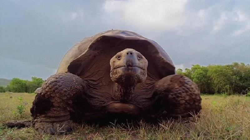 یک میلیون گونه جانوری در آستانه انقراض هستند | مشاور محیط زیست